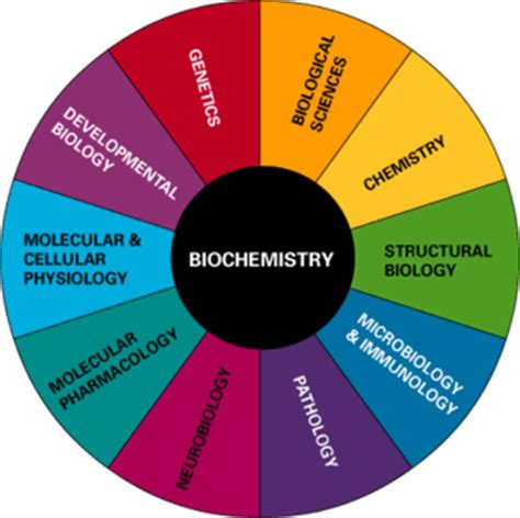 Research paper on food biochemistry
